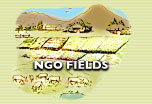 NGO FIELDS